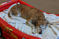 BarkZone Doggie Daycare - Portland, OR