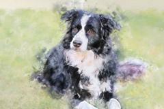 Request Quote: Better Pet Portraits by Sarah Cameron - Phoenix, AZ