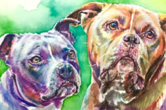 Watercolor Pet Portraits - Brooklyn, NY