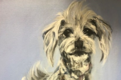 Expressionistic Colorful Pet Portraits - Foster City, CA
