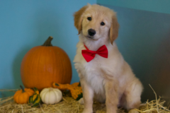 Request Quote: Bath House Pet Grooming and Spa - Jacksonville Beach, FL