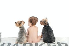 Dogma Pet Portraits - Costa Mesa, CA