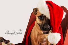 Request Quote: Animal Tales Studio - Darden, TN