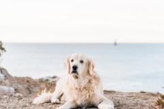 Request Quote: Dog Adventure Session - Newport, RI