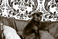 Request Quote: Alana's Fine Art Pet Photography - Strong, ME
