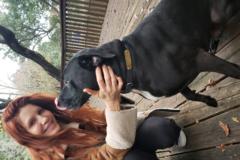 Request Quote: Pet Sitting - Austin, TX