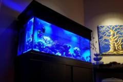 Blue Light Aquatics  - Amherst, NH