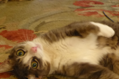 Cat Sitting/Boarding with Julie Prince - New York, NY