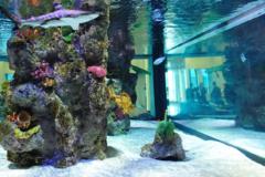 Request Quote: Professional Aquarium services  - Glastonbury, CT