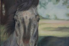 Request Quote: Oil or Pastel Pet Portraits - professional Artist/Teacher - Roseville, CA