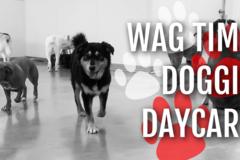 Wag Time Doggie Daycare - Arlington, TX