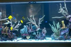 Request Quote: Aquarium Network - Bellmore, NY