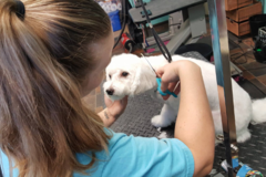 Request Quote: A Gentle Touch Grooming  - Ruskin, FL