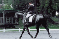 Request Quote: The Right Touch Equine Bodywork - Ancram, NY
