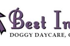 Best In Show Doggy Daycare, Groom & Board - Atlanta, GA