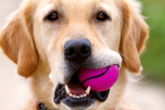 Request Quote: It's A Dog's World K-9 Academy,  Inc. - Chino, CA