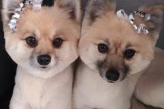 Request Quote: K9Design Mobile Pet Salon, LLC  - Finchville, KY