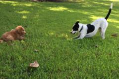 Request Quote: All God's Creatures Pet Services - Memphis, TN