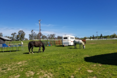 Request Quote: AB Equestrian Center  - Auburn, CA