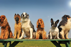 Request Quote: Pet Waste Removal  - Rochester, MN