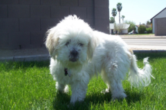 Request Quote: Sue's Pet Friends - Chandler, AZ