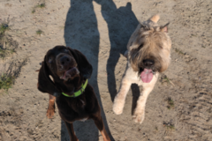 Request Quote: All Big Canines - Desert Hot Springs, CA