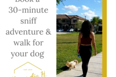 Request Quote: Always Aja H. Dog Walking and Pet Sitting - Hialeah Gardens, FL