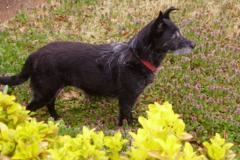 Request Quote: Gotta Go Pet Services - Memphis, TN