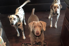 Request Quote: Rutledge Pet Sitting - Fort Worth, TX