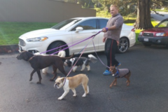 Request Quote: Dogs Love To Walk - Foster City, CA