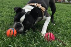 Request Quote: Ms. B's Pet Care - Boston, MA