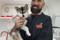 Request Quote: Aussie Pet Mobile-Sherman Oaks - Sherman Oaks, CA
