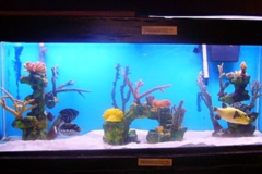 Request Quote: Seascapes Aquariums - Forestdale, MA