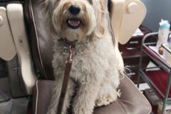 Request Quote: Happy Pet Care Services - San Francisco, CA