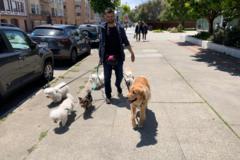 Request Quote: AWROOF! Pet Concierge - San Francisco, CA