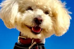 Request Quote: Happy Paws Dog Training LA  - Los Angeles, CA