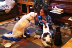 Request Quote: Pet Massage,Reiki and training at  All well Beings  - Smithfield, RI