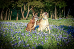 Request Quote: 12:10 Dog Training - Selma, TX