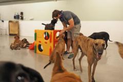 Request Quote: Atlas Doghouse and DogwalkingDC - Washington, DC