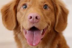 Request Quote: Precious Pets - Oklahoma City, OK