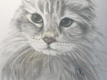 colorado feline