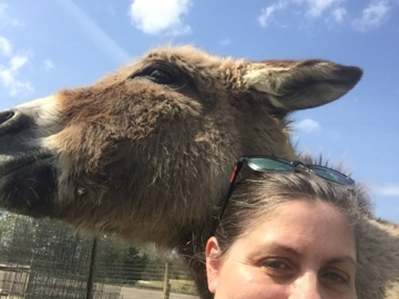 After reiki with a donkey at an animal sancuary
