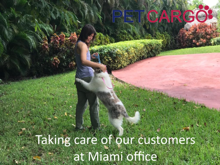 Domestic Pet Transport and Care