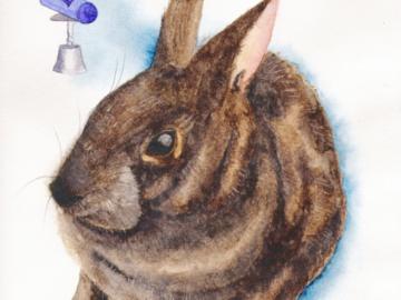 Marsh Rabbit