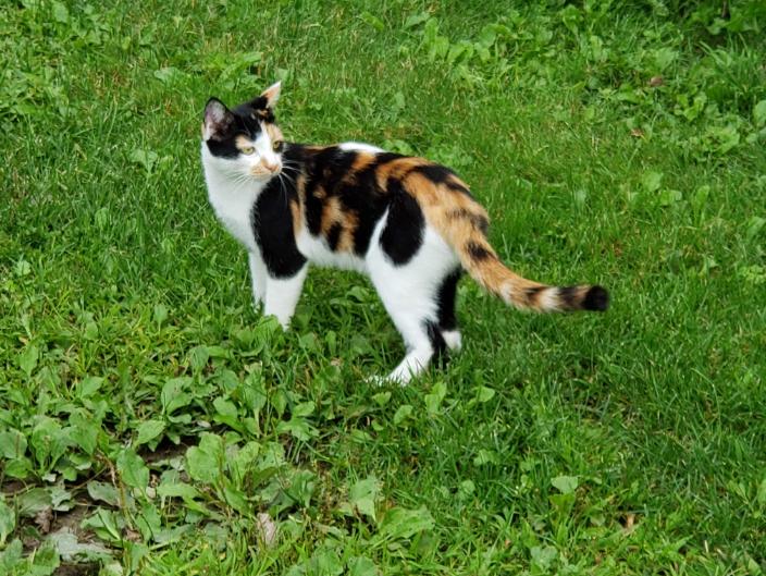 Munchie is a farm cat in Starksboro, VT