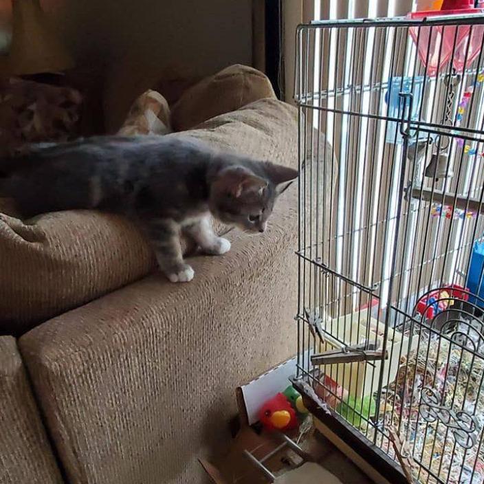 Kitten and love bird