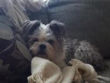 Josie snuggled after walk