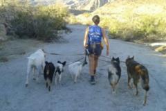 Request Quote: Happy DOG Training - La Quinta, CA