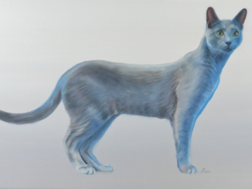 "'Richio' - Russian Blue - Oil on canvas, 18 x 30"""