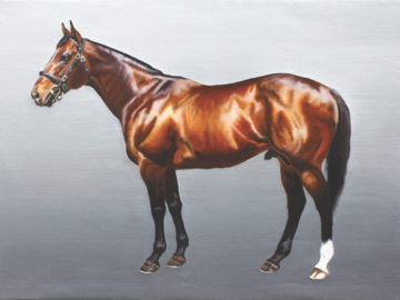 """'Shamardal' - Record holding Racehorse - Oil on canvas, 20 x 28"""""""